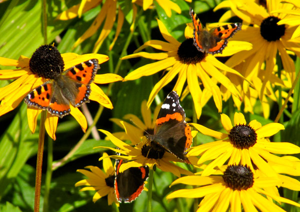 Butterflys at Ness Botanic Gardens, The Wirral