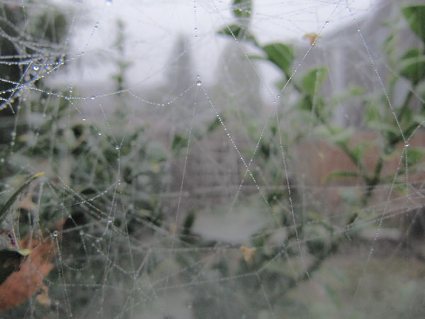 cobwebs and fog