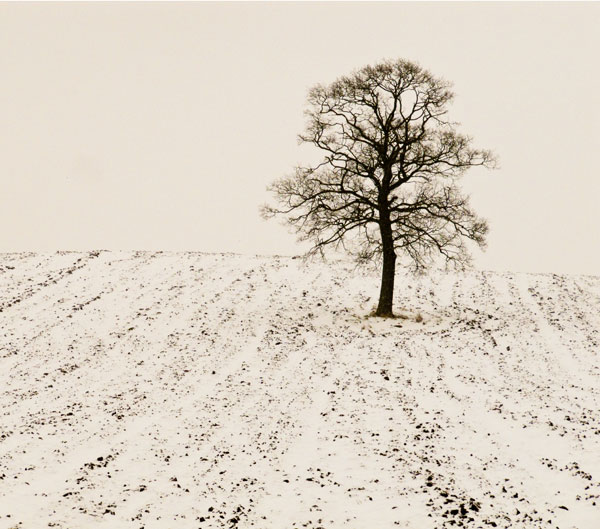 Tree in snow field ~ Herefordshire