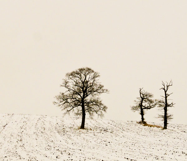 Trees in snow field ~ Herefordshire