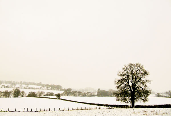 Landscape in snow ~ Herefordshire